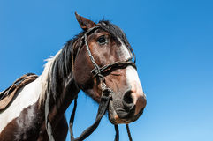 Horse bridle portrait Stock Photo