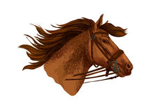 Horse in bridle, running mustang head vector Royalty Free Stock Photos