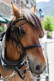 Horse on a Bridle in a Small Town Royalty Free Stock Photo