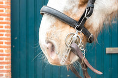 Horse with Bridle Stock Photos