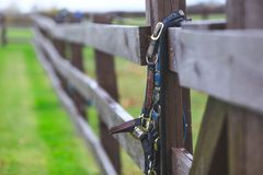 Horse bridles hanging on the fence of fenced area with shallow d royalty free stock photos