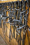 Horse bridles hanging in stable Royalty Free Stock Images