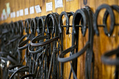 Horse bridles hanging in stable Royalty Free Stock Photography