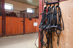Horse bridles hanging in stable Royalty Free Stock Image