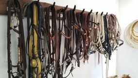 Horse bridles Royalty Free Stock Images