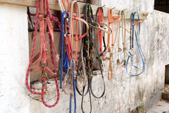 Horse bridles hanging Royalty Free Stock Photo