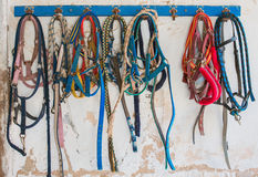 Horse bridles. Stock Image