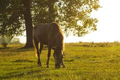 Summer rural landscape with horse in green meadow Stock Image