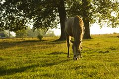 Summer rural landscape with horse in green meadow Stock Photography