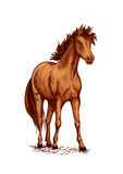 Horse brown foal or stud vector sketch for racing. Horse foal or young mare vector sketch. Brown wild or farm stallion symbol for equestrian racing sport, horse Stock Image