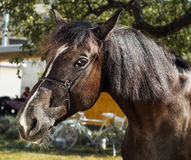 Horse with a brown mane stands on a background of green leaves. Brown horse with a brown mane stands on a background of green leaves Royalty Free Stock Images