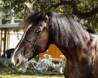 Horse with a brown mane stands on a background of green leaves. Brown horse with a brown mane stands on a background of green leaves Royalty Free Stock Photos