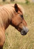 Horse. Brown horse in the summer field royalty free stock images