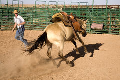 Horse bucking and cowboy. A cowboy runing away from a bucking horse Stock Photo