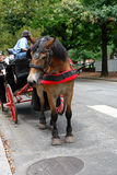 Horse & buggy. Horse and buggy in tourist area in philadelphia Royalty Free Stock Photography