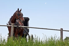 Horse and buggy Royalty Free Stock Photography