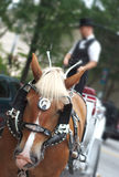 Horse and buggy. A horse pulling a buggy downtown stock image