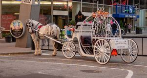 Horse and Buggy Ride stock photos