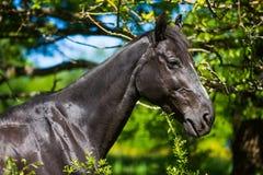Horse in the bush Stock Image