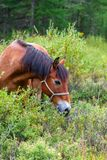 The horse in the bushes, grazing Royalty Free Stock Photo