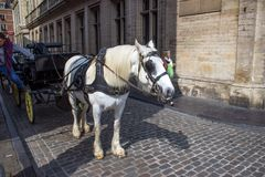 Horse cab Royalty Free Stock Images