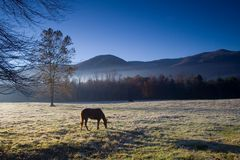 Horse at cades cove. Morning scene with fog over pasture and horses at Cades Cove Stock Photo