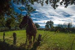 Horse at camino. Horse meet at camino de Santiago Royalty Free Stock Images