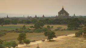 The Horse car in the plain of Bagan at sunset, Bagan, Myanmar stock video