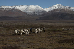 Horse caravan leaving for the mountains. Royalty Free Stock Image