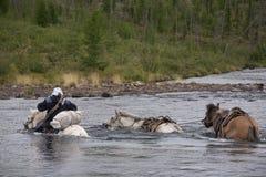 Horse caravan. Stock Photo