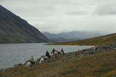 Horse caravan on the shore of a mountain lake. Stock Photos