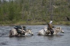 Horse caravan Stock Photos