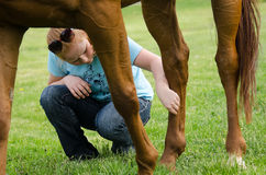 Horse Care Royalty Free Stock Photo