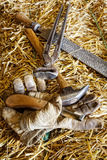 Horse Care Implements Stock Photo