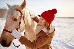 Horse care Royalty Free Stock Photos