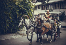 Horse cargo in princess island Royalty Free Stock Photography