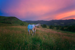 Horse in the Carpathian Mountains Stock Images