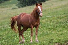 Horse in Carpathians stock images