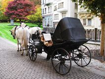 Horse carriage. In the street in Carlovi-vary, Czech Republic Stock Images