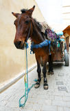 Horse with carriage Royalty Free Stock Photography