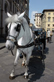 Horse and Carriage. In Florence Royalty Free Stock Images