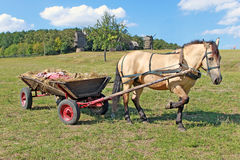 Horse and carriage. Trained horse and carriage in the summer Stock Photos