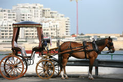Horse and carriage. A picture of a  brown horse and a carriage on the street of Valetta, Malta Stock Photography