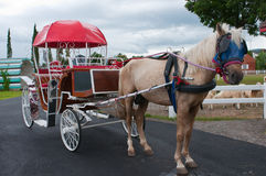 Horse carriage. A horse with vintage horse carriage stock image