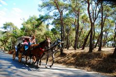 Horse carriage. At Prince Island ,in İstanbul,Turkey Royalty Free Stock Photos