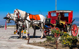 Horse with a carriage Royalty Free Stock Photo