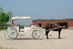 Horse and Carriage. A horse with a white carriage Stock Images