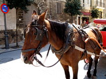 Horse and carriage. Horse pulling a carriage in the town of Palma de Mallorca, Spain stock photos