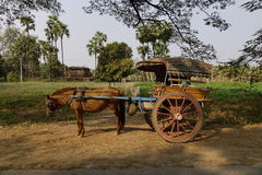 Horse carriage for ancient city tour in Myanmar Stock Images