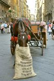 Horse carriage as taxi in Italy  Stock Photo